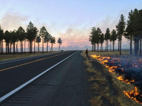 Wildland firefighter walks along a road with flames on one side